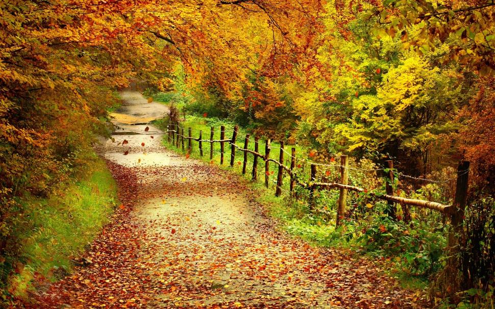 beautiful-autumn-scenery-trees-yellow-leaves-path-2K-wallpaper-middle-size