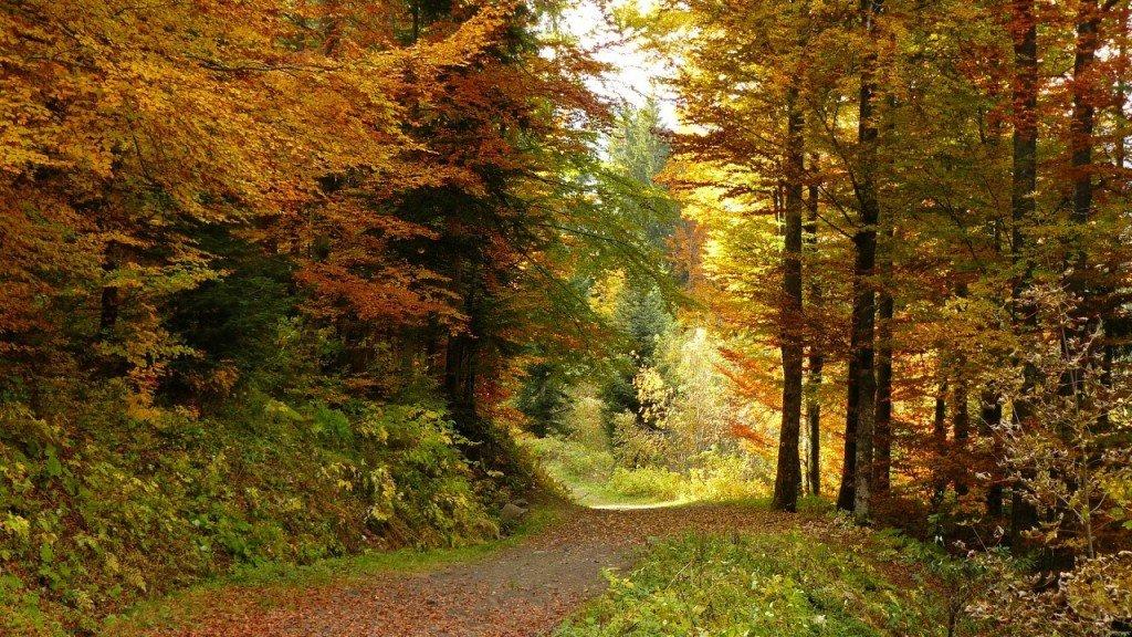 couleurs-d-automne.72323
