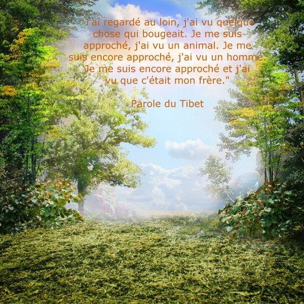 parole du tibet