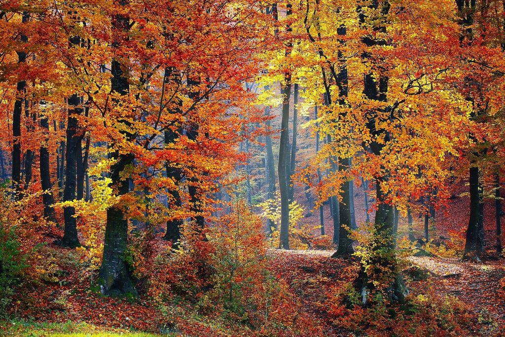 pourquoi-les-feuilles-des-arbres-changent-elles-couleur-automne_width1024