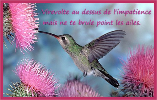 proverbes-chinois-8